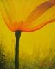 flower-bulb