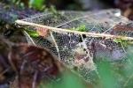 Blattskelett im Regenwald der Österreicher in Costa Rica